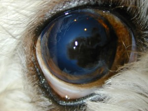 Eye Boogers Dog Health Forum