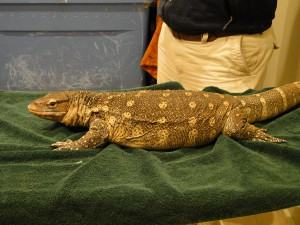 Nile Monitor in the exam room